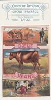 Publicité : CHOCOLAT PAYRAUD : Hors Concours Lyon ( Boeuf - Vache )  Petit Format 14 X 7,3 - Cows