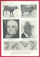 Greffe Testiculaire Chez L'animal Et Chez L'homme, Dr Voronoff, Larousse Médical De 1934 - Autres