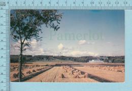 Brandon Manitoba Canada - Experimental Farm - Postcard Carte Postale - Brandon