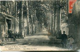 Canet Les Allées Du Pont Circulee En 1914 RARE Belle Animation - Autres Communes