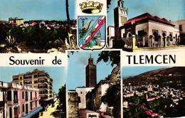 ALGERIE - SOUVENIR DE TLEMCEN - Tlemcen