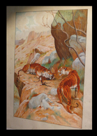 [ART ANIMALIER TIGRE GAZELLE] TRUBLARD (R.) - [Aquarelle Signée]. - Watercolours