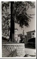 ! Foto Ansichtskarte, Photo Bordighera, 1941, Italien, Italy, Imperia - Imperia