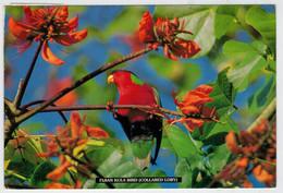 FIGI    FIJAN  KULA  BIRD  (COLLARED  LORY)          (VIAGGIATA) - Figi