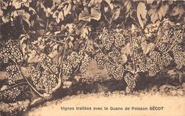¤¤  -  BORDEAUX-BASTIDE  -  Vignes Traitées Avec Le Guano De Poisson BECOT & FILS 149 Rue Bouthier  -  Publicité - Bordeaux