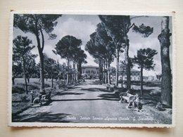 1957 - Imola - Istituto Tecnico Agrario G. Scarabelli -  Cartolina Storica Originale Firmata Dal Grande Angelo Banzola - Imola