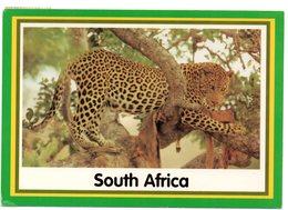 Tarjeta Postal De Sudafrica Circulada 2000 - Sudáfrica