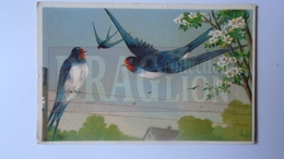 D159053 Swallow Avaler Schlucken - Hungary  Orosháza  1908 EAS - Birds