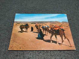 ANTIQUE POSTCARD MOROCCO CAMEL CARAVAN CIRCULATED 1977 - Maroc