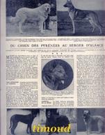 DU CHIEN DES PYRENEES AU BERGER D' ALSACE / BOUVIER BRIARD .../ LOUIS DE LAJARRIGE / ARTICLE / 1920 - Vieux Papiers