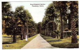 CEYLON - SRI LANKA -  Royal Botanical Gardens, Peradeniya, Ceylon - Sri Lanka (Ceylon)