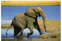 Tarjeta Postal De Sudafrica Circulada 2000 Elefante. - Sudáfrica