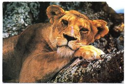 Tarjeta Postal De Sudafrica Circulada 2000 Leon. - Sudáfrica