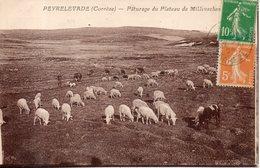 19. Peyrelevade. Pâturages Du Plateau De Millevaches - Autres Communes