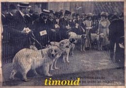 A L' EXPOSITION CANINE / PRESENTATION DES CHIENS DES PYRENEES / 1908 - Vieux Papiers