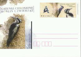 Polen GS 'Gefährdete Tiere, Dreizehenspecht' / Poland P.c. 'Endangered Animals, Three-toed Woodpecker' **/MNH 2018 - Specht- & Bartvögel