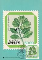 FLORES REGIONAIS DOS AÇORES, LAURUS AZORICA. MAXIMUM CARD 1981. - BLEUP - Bloemen, Planten & Bomen