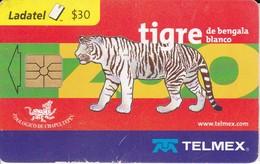 TARJETA DE MEXICO DE UN TIGRE BLANCO (TIGER) - Sin Clasificación