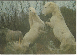 Chevaux Sauvages - Pferde