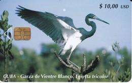 185 TARJETA DE CUBA DE UNA GARZA DE VIENTRE BLANCO (BIRD-PAJARO) - Cuba