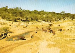 1 AK Namibia * Landschaft In Namibia - Rinder Im Revier * - Namibia