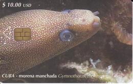 106 TARJETA DE CUBA DE UNA MORENA FISH-PEZ  (VIDA SUBMARINA -LIFE SUBMARINE) - Cuba