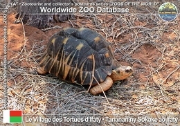 317 Le Village Des Tortues D'Ifaty, MG - Radiated Tortoise (Astrochelys Radiata) - Madagascar