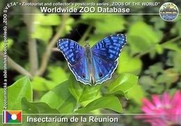 027 Insectarium De La Reunion, RE - Pansy (Junonia Rhadama) - Reunion