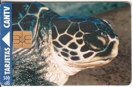VENEZUELA - Turtle, 04/95, Used - Tortugas