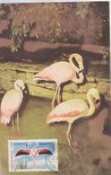 FLAMINGO   BIRDS, FAUNA, MAXIMUM CARD ROMANIA 1988 - Flamingo