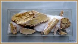 Lot De Fragments De Fossiles à Identifier - Fossilien