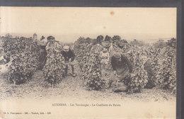 °°°°  89  AUXERRE  :   Les Vendanges , Cueillette Du Raisin      ////  REF  JUIN 18 // BO.89 - Auxerre