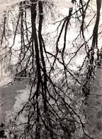 Grande Photo Originale Photographe Amateur Otto Stenberg -Reflets D'Arbres En Flaques D'eau Vers 1970/80 - Places