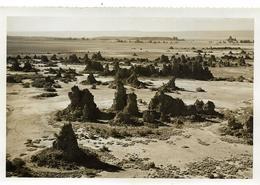 ~  JP ~ DJIBOUTI  ~  LAC ~ ABBE  .  Photographie .     16,3 Cm X 11 Cm . Rare à Saisir . - Djibouti