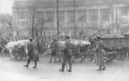 CARTE PHOTO ALLEMANDE SPA  1918  DEPART DES  ALLEMANDS  TRAVERSEE DE SPA Avec BOVINS - Spa