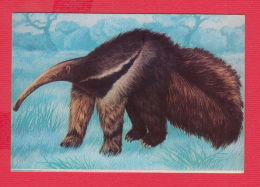 K1818 / 1979 Animal  Anteaters  Myrmecophagidae (Myrmecophagidae) Calendar Calendrier Kalender  Bulgaria - Calendars
