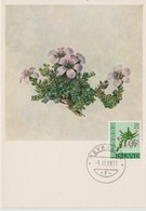 Carte Maximum Fleurs 1968 Saxifraga 370 - Cartoline Maximum