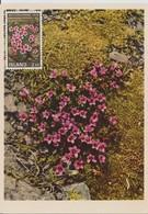 Carte Maximum Fleurs 1970 Saxifraga 400 - Cartoline Maximum