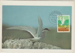 Carte Maximum Oiseau 1972 Sterne 423 - Cartoline Maximum