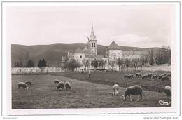 CPSM - DOURGNE - Abbaye De Ste-Scholastique - La Montagne Noire - Moutons - Ed. CIM - Dourgne