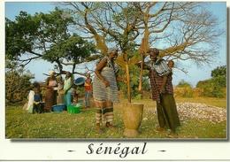 SENEGAL   République Du SENEGAL Pilage Du Mil Pour La Preparation Du Repas , Millet Pounding For Cooking - Sénégal