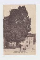 Gorbio. Alpes Maritimes. Le Grand Orme, Planté En 1713. (2973) - France
