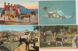 18 / 6  / 376  -  LOT  DE  4  CP  & 5  CPSM  &  2  REPRO  D'ÂNES  - Toutes Scanées - Postcards