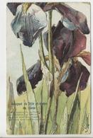 Illustrateur - KLEIN - Bouquet De Fête Et Voeux Du Coeur: IRIS - Klein, Catharina