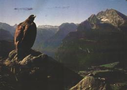 Tiere / Animals / Animaux: Steinadler (D-A265) - Vögel