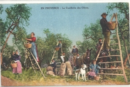 C PA  Cueillette Des Olives En Provence - Altri Comuni