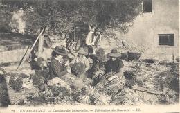 C P A En Provence Cueillette Des Imortelles - Altri Comuni