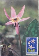 PLANT FLOWER MAXIMUM CARD ROMANIA, CANCEL HATEG, HUNEDOARA - Maximumkaarten