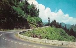 CARTE POSTALE ORIGINALE DE 9CM/14CM : ROAD BETWEEN GATLINBURG AND NEWFOUND TENNESSEE USA - Etats-Unis