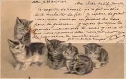 Chat - Chatons, Gauffrée - Chats